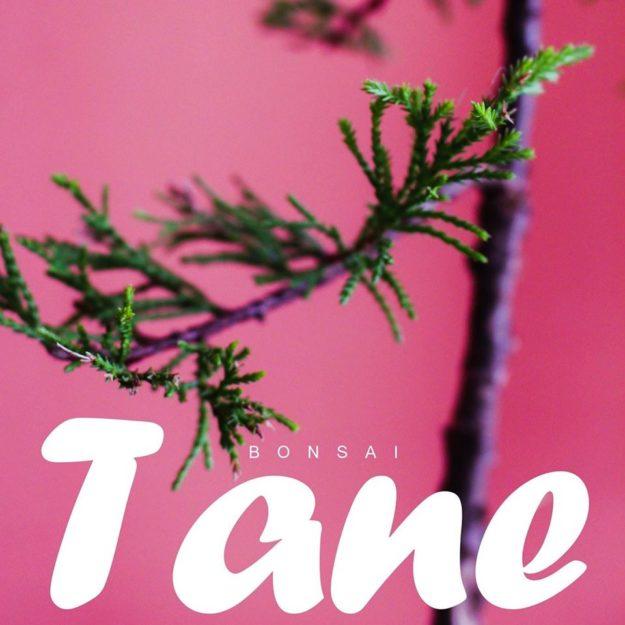 Bonsai Tane